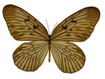 Mariposa ambrina Imagen de archivo libre de regalías