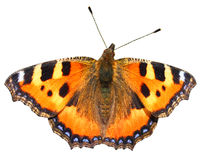 Mariposa anaranjada aislada Foto de archivo