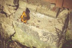 Mariposa anaranjada en el hormigón Fotografía de archivo