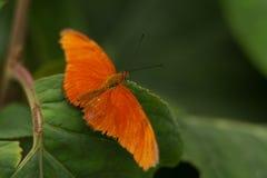 Mariposa anaranjada en la hoja Imagenes de archivo