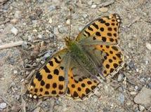 Mariposa anaranjada en la tierra Foto de archivo