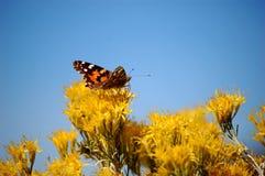 Mariposa anaranjada en las flores amarillas Fotos de archivo libres de regalías