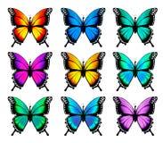 Mariposa anaranjada hermosa en diversas posiciones Imagenes de archivo