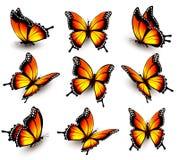 Mariposa anaranjada hermosa en diversas posiciones Foto de archivo