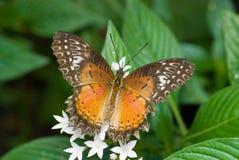 Mariposa anaranjada y marrón Foto de archivo libre de regalías
