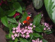 Mariposa anaranjada y negra Fotos de archivo libres de regalías