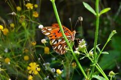 Mariposa anaranjada y negra brillante Imagen de archivo libre de regalías