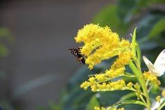 mariposa Anaranjado-negra Fotografía de archivo libre de regalías