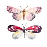 Mariposa asombrosa de la acuarela Foto de archivo libre de regalías