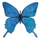 Mariposa azul Imagen de archivo libre de regalías