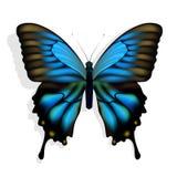 Mariposa azul Fotos de archivo