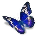 Mariposa azul Fotografía de archivo