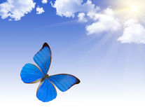 Mariposa azul bajo el sol brillante Fotos de archivo