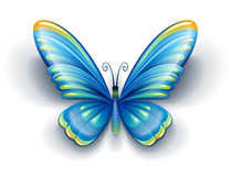 Mariposa azul con las alas del color Foto de archivo libre de regalías