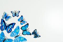 Mariposa azul en el fondo blanco Imágenes de archivo libres de regalías