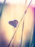 Mariposa azul en la hierba Fotografía de archivo libre de regalías
