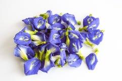 Mariposa azul Pea Flower en el fondo blanco Fotografía de archivo libre de regalías