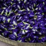 Mariposa azul Pea Flowers para el champú herbario foto de archivo