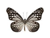 Mariposa blanco y negro aislada en el fondo blanco Imagenes de archivo