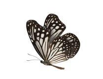 Mariposa blanco y negro aislada en el fondo blanco Imagen de archivo