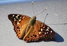 Mariposa bonita Foto de archivo
