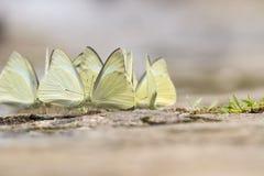 Mariposa bonita en un suelo arenoso Imagenes de archivo
