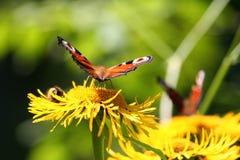 Mariposa brillante en la flor amarilla en un fondo verde foto de archivo libre de regalías