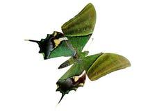Mariposa brillante verde Fotos de archivo libres de regalías