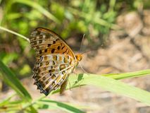 mariposa Cepillo-con base Foto de archivo libre de regalías