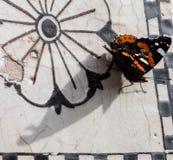 Mariposa, cierre para arriba Imágenes de archivo libres de regalías