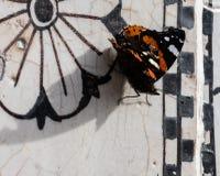 Mariposa, cierre para arriba Imagenes de archivo