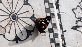 Mariposa, cierre para arriba Fotos de archivo