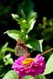 Mariposa coloreada Fotografía de archivo libre de regalías