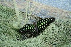 Mariposa coloreada en la rejilla verde Imagen de archivo libre de regalías