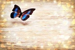 Mariposa coloreada que vuela sobre un fondo ligero Fotografía de archivo