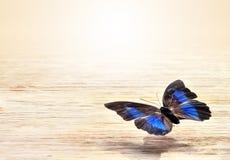 Mariposa coloreada que vuela sobre un fondo ligero Fotos de archivo