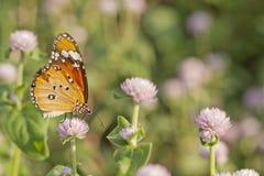 Mariposa colorida Imágenes de archivo libres de regalías