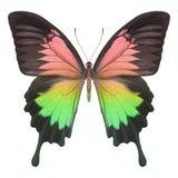 Mariposa colorida Fotografía de archivo