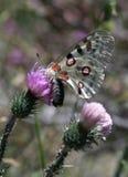 Mariposa colorida imagen de archivo