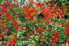 Mariposa colorida Imagen de archivo libre de regalías