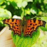 Mariposa colorida imagenes de archivo