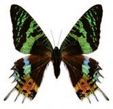 Mariposa colorida en blanco Foto de archivo libre de regalías