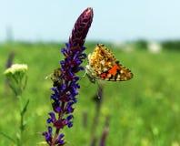Mariposa colorida en la flor azul hermosa cerca con el  Fotografía de archivo