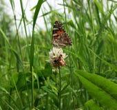 Mariposa colorida y abeja que se sientan en la flor Fotografía de archivo libre de regalías