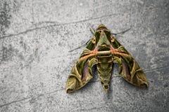 Mariposa con diversos colores con el fondo gris fotografía de archivo