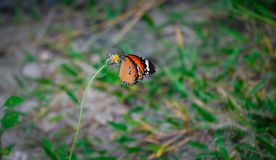 Mariposa con el árbol de la flor Fotografía de archivo