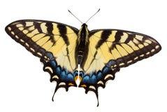 Mariposa con el camino de recortes Foto de archivo libre de regalías