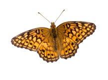 Mariposa con el camino de recortes Fotos de archivo