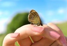 Mariposa con el modelo de los redondos en las alas imagenes de archivo