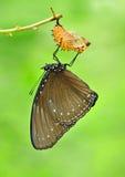 Mariposa con el shell Imágenes de archivo libres de regalías